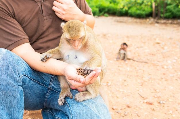 Um homem estava alimentando os macacos