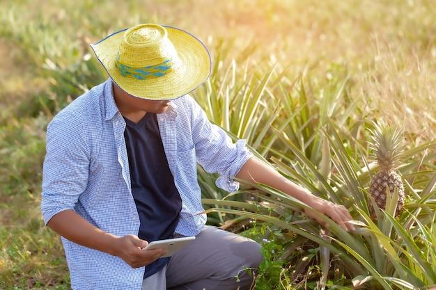 Um homem para usar cheque lê ou analisa um relatório de mandioca em fazenda de plantação em tablet computeragricul