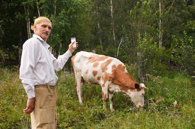 Um homem pastava uma vaca em um prado verde. o gado come capim. o fazendeiro bebe leite em um copo. comida saudável: leite de aldeia. um aposentado cuida do gado