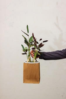 Um homem tem nas mãos um vaso com uma flor no fundo da parede. embalagem ecológica para vasos de plantas. flor ktenana