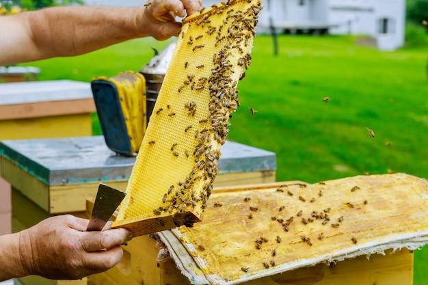 Um homem verifica a apicultura do favo de mel segurando um favo de mel com abelhas perto das colméias