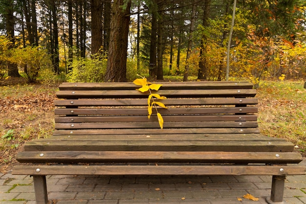 Um idílio de outono, um banco de parque solitário espera os visitantes.