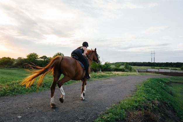 Um jóquei jovem bonita montando um garanhão puro-sangue está envolvido em passeios a cavalo ao pôr do sol. esportes equestres., passeios a cavalo.