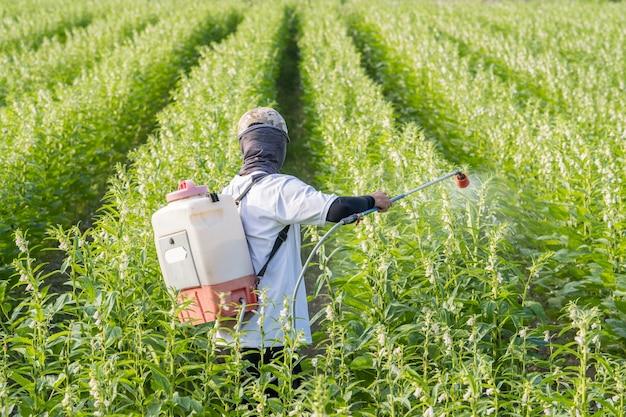 Um jovem agricultor está pulverizando pesticidas (produtos químicos agrícolas) em seu próprio campo de gergelim para prevenir pragas e doenças de plantas pela manhã, close up, xigang, tainan, taiwan