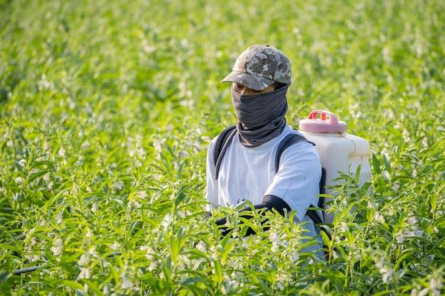Um jovem agricultor pulverizando pesticidas (produtos químicos agrícolas) em seu próprio campo de gergelim
