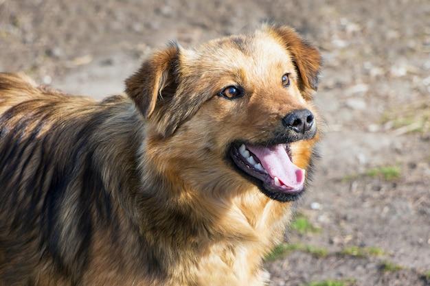 Um jovem cachorro marrom com a boca aberta no tempo ensolarado