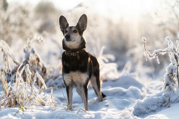 Um jovem cão terrier sem raça definida com orelhas caídas em pé ao ar livre na neve