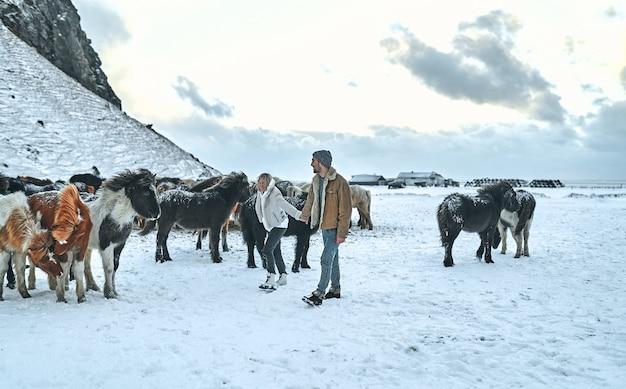 Um jovem casal de turistas de mãos dadas caminha entre as pastagens de cavalos selvagens nas encostas de montanhas cobertas de neve.