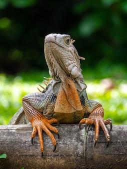 Um lagarto parado na madeira no jardim