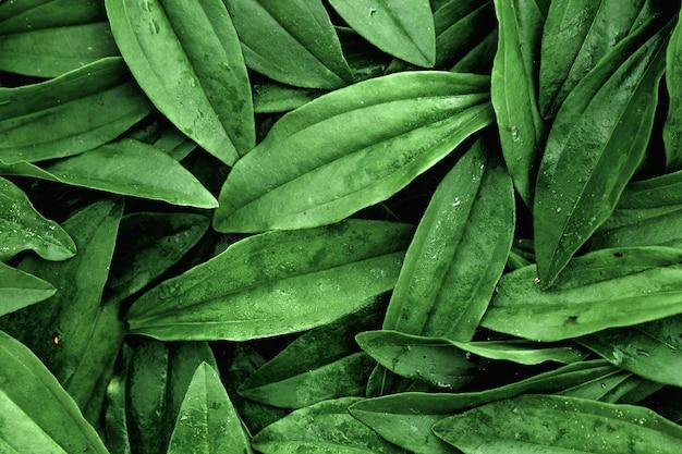 Um layout de folhas verdes