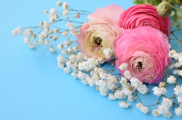Um lindo buquê de ranúnculo rosa (botões de ouro) com delicadas flores brancas de gipsófila em uma superfície azul