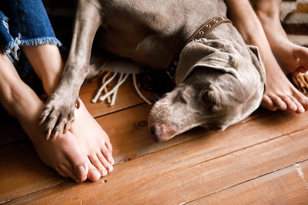 Um lindo cachorro está deitado no chão aos pés do dono. vista superior de um cachorro grande e bem tratado deitado no chão próximo às pernas de seus donos