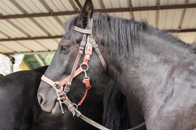 Um lindo cavalo preto em um estábulo