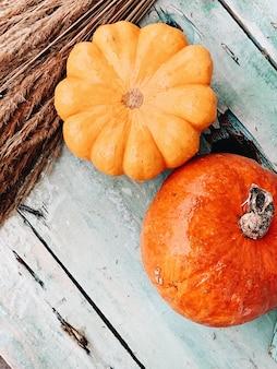 Um lindo com grandes abóboras laranjas