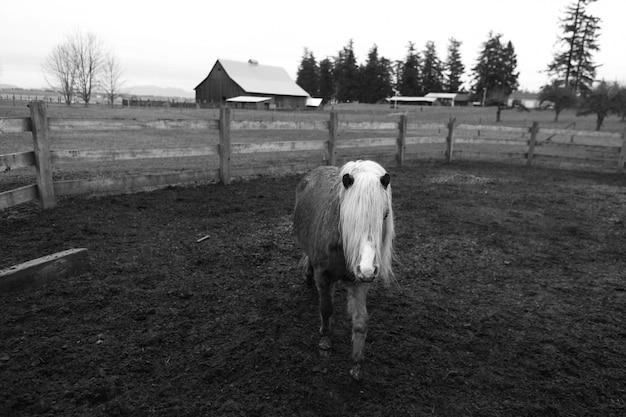 Um lindo e jovem pônei em uma fazenda
