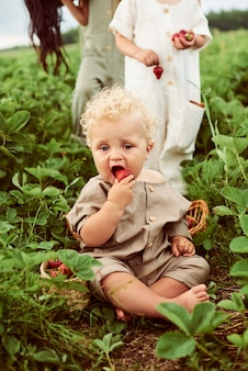 Um lindo garoto encaracolado bonito com uma cesta de morangos reúne uma nova colheita ao ar livre no campo verde