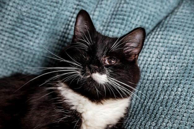 Um lindo gato peludo preto e branco com um olho só no sofá