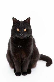Um lindo gato preto posando isolado