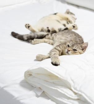 Um lindo gato ruivo dormir na cama branca