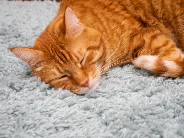 Um lindo gato vermelho dorme em um tapete fofo.