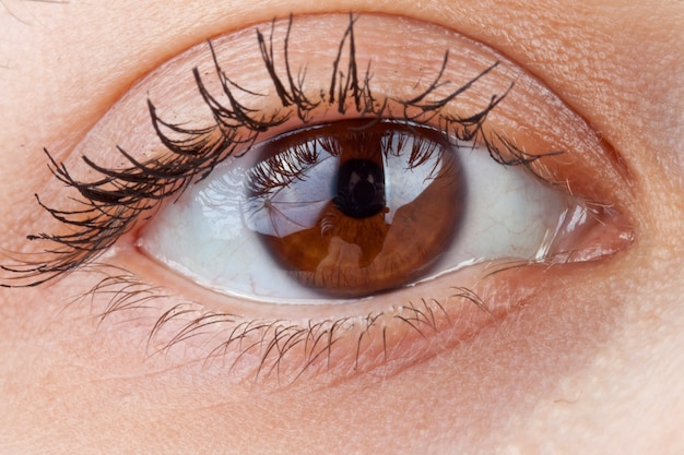 Um lindo macro olho humano