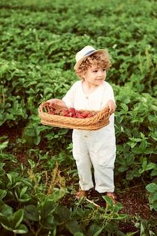 Um lindo menino bonito com uma cesta de morangos reúne uma nova colheita ao ar livre no campo verde