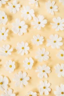 Um lindo padrão com camomila branca, flores de margaridas em amarelo claro
