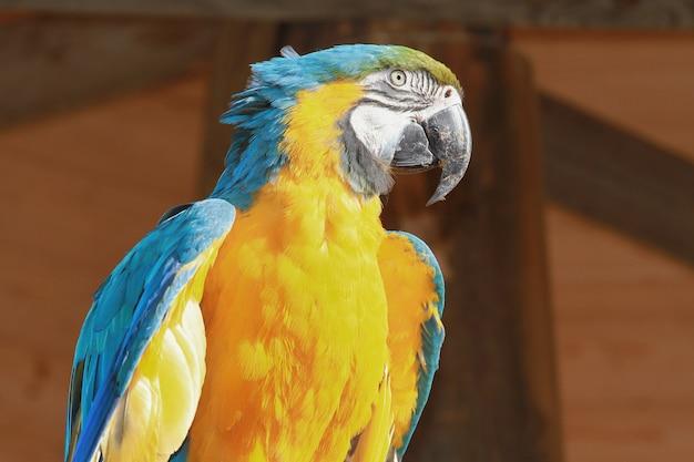 Um lindo papagaio azul e amarelo