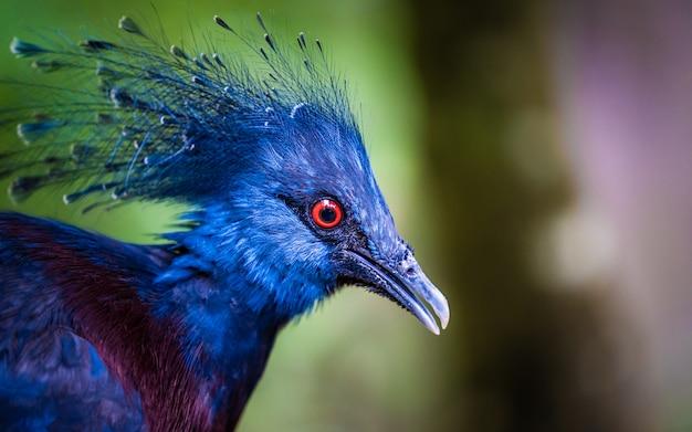 Um lindo pavão de plumagem