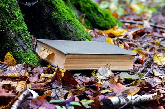 Um livro no jardim sob uma árvore coberta de musgo entre folhas caídas