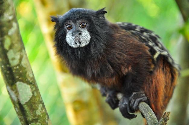 Um macaco em uma árvore