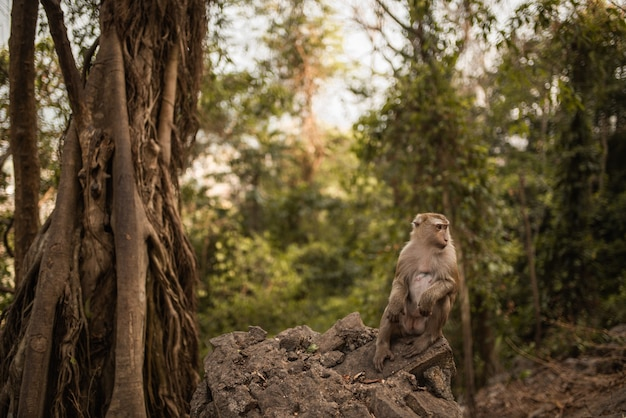 Um macaco ruivo esperto sentado no chão e comendo uma suculenta melancia vermelha