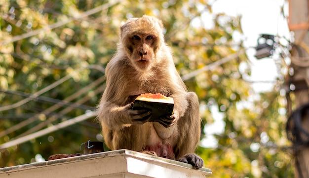 Um macacos pendurados e brincando em uma árvore