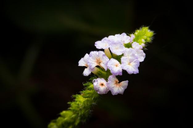 Um, macro, cima, de, um, pequeno, minúsculo, florescer florescendo