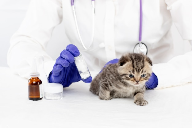Um médico em uma clínica veterinária detém comprimidos para um gatinho