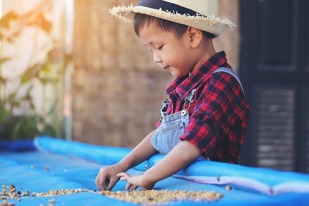Um menino asiático está secando os grãos de café ao sol da manhã.