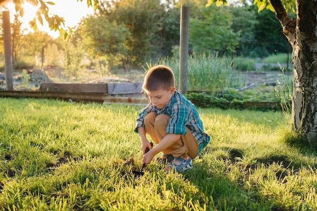Um menino bonitinho está plantando brotos no jardim ao pôr do sol. jardinagem e agricultura.