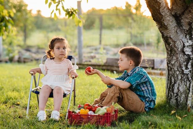Um menino e uma menina pequenos sentam-se debaixo de uma árvore no jardim com uma caixa inteira de legumes maduros ao pôr do sol. agricultura, colheita. produto ecológico.