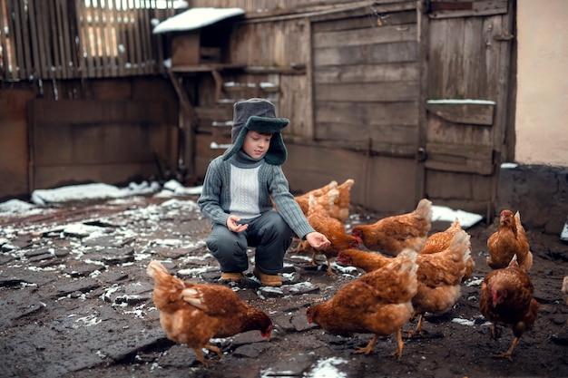 Um menino em um pátio alimenta galinhas de sua mão com grãos.