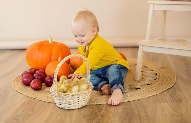 Um menino está sentado entre as abóboras com uma cesta de patinhos.