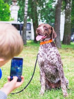 Um menino fotografa ao telefone um ponteiro alemão de pêlo curto de raça de cachorro