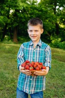Um menino pequeno e bonito fica com uma grande caixa de morangos maduros e deliciosos. colheita. morangos maduros. baga natural e deliciosa.