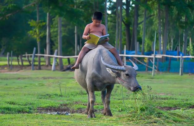 Um meninos montando búfalos e lendo um livro para a educação.