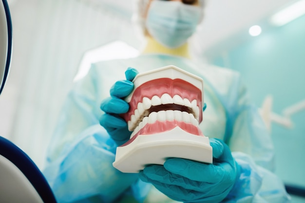 Um modelo de mandíbula humana com dentes na mão do dentista.