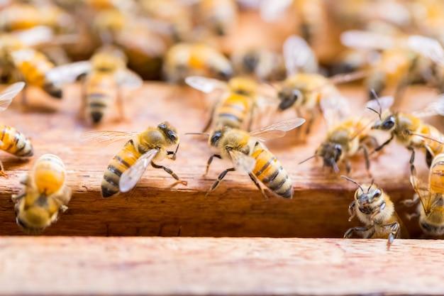 Um monte de abelhas no fundo do favo de mel