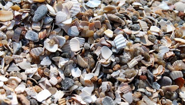 Um monte de conchas e pedras em close-up de fundo de praia de areia.