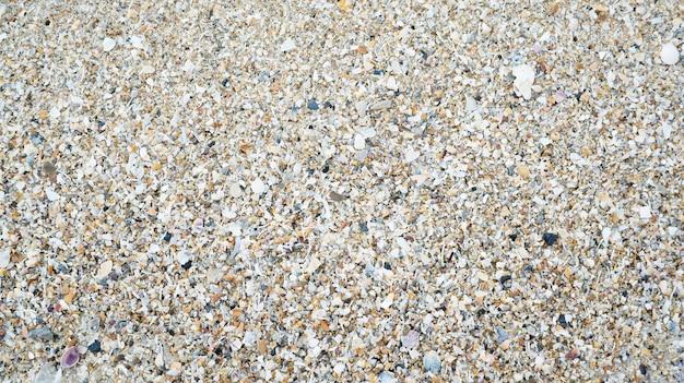 Um monte de conchas para um fundo.