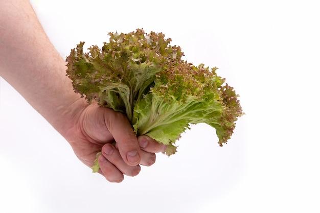 Um monte de folhas de alface na mão de um homem em branco
