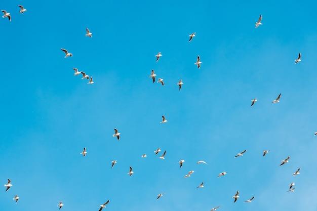 Um monte de gaivotas voando no fundo do conceito de liberdade de céu azul. animais.