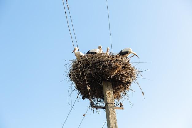 Um ninho com cegonhas em um poste de uma linha de energia em uma aldeia.